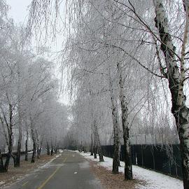 Snow by Ognjen Weinacht - City,  Street & Park  City Parks ( snow, street, park )