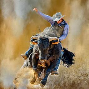 Bull Rider by Rich Reynolds - Sports & Fitness Rodeo/Bull Riding ( bull rider, cowboy, rodeo, sport, bull )