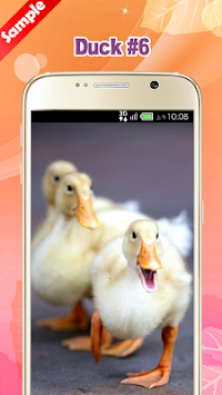 Download Duck Wallpaper APK latest version app for android devices