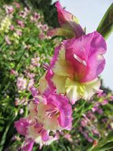 Photo: Beautiful pink and yellow flowers at Wegerzyn Gardens in Dayton, Ohio.