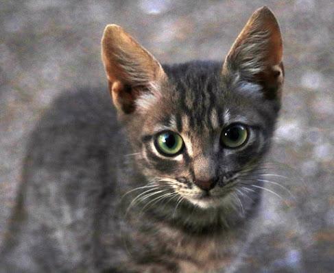 Ritratto felino di Fe140