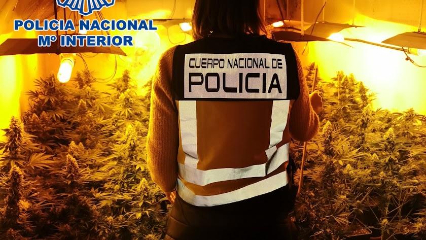Una de las plantaciones halladas por la Policía Nacional.