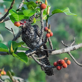 Breakfast  by Swati Mukherjee - Nature Up Close Other Natural Objects