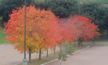 Photo: a wee bit of fall color in Natchez MS