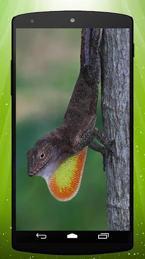 Jungle Lizard Live Wallpaper