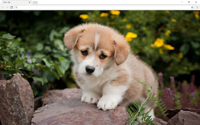 Cute Dogs Backgrounds & New Tab