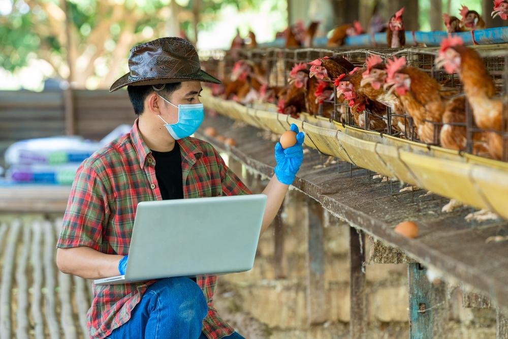 Produção em granjas chinesas podem ser rastreadas utilizando tecnologia blockchain. (Fonte: Shutterstock)