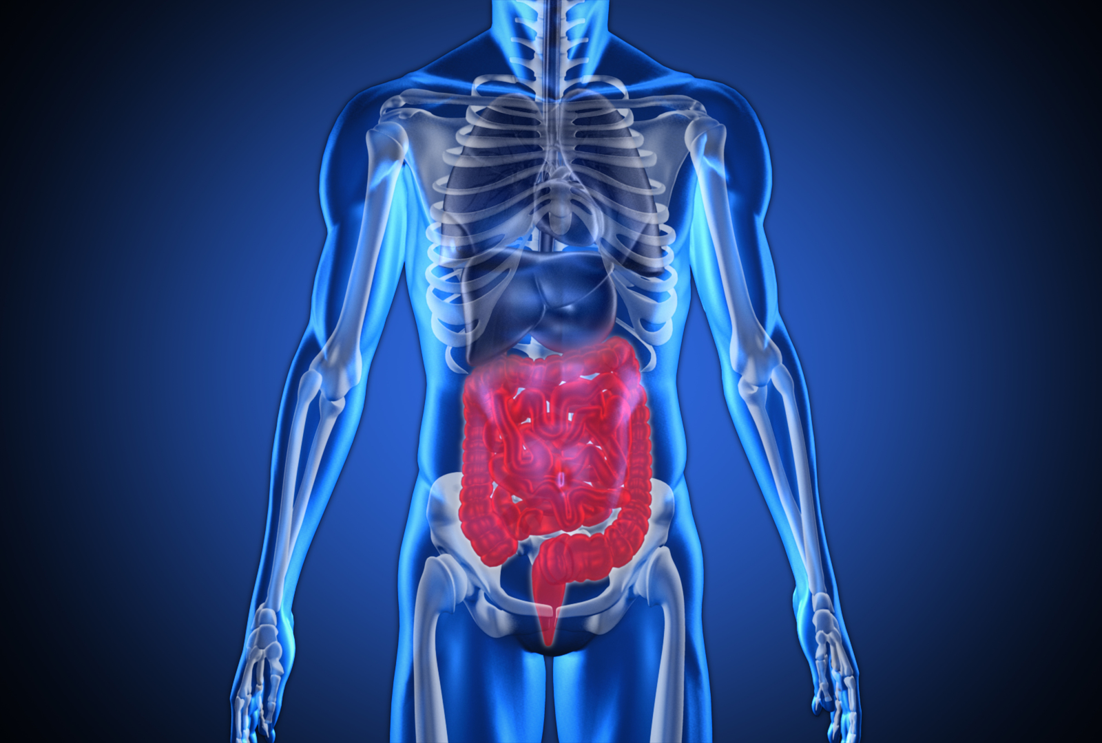 The Relationship Between Gut Health and Anxiety 2
