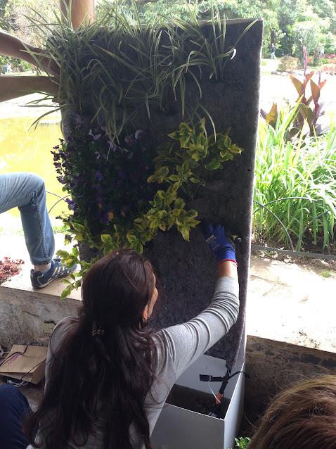 Colocación de las plantas