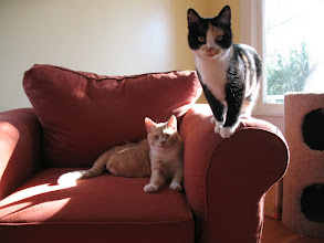 Photo: The kitties love our new furniture.
