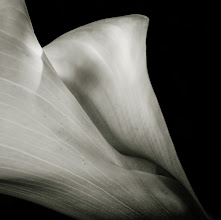 Photo: #FloralFriday  a little slice of a calla lily for Floral Friday ...