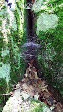 Photo: A vertical shot of the spiderweb.
