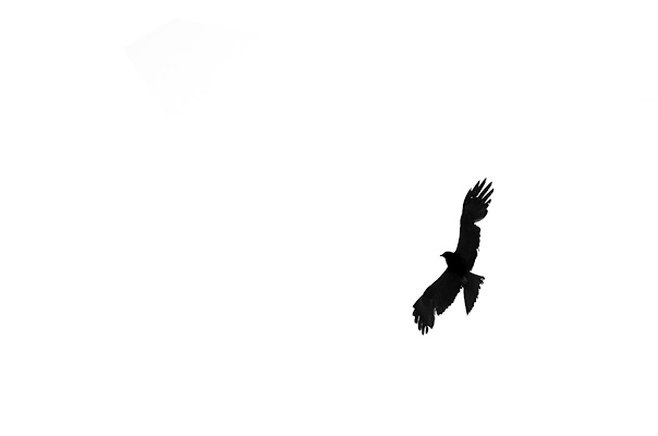 Bird's flying high you know how i feel di AliceB