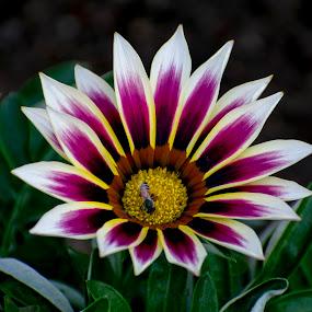 Beautiful winter flowers  by Basant Malviya - Flowers Single Flower ( flower nature )