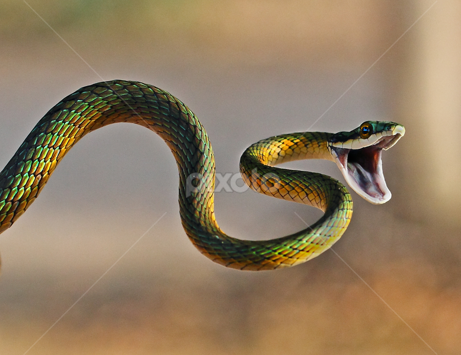 The Greeting ! by Sue Green - Animals Reptiles (  )