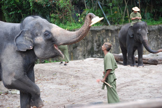 Photo: The elephants put on a show, putting the hat on the handler's head!