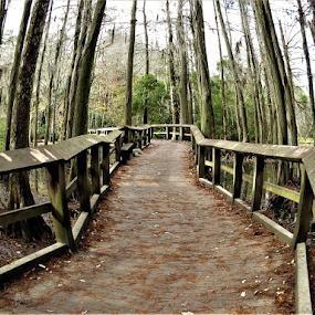 Boardwalk by Hal Gonzales - Buildings & Architecture Bridges & Suspended Structures ( woods, walkway, swamp, water, cypress,  )