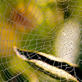 by Carl Sieswono Purwanto - Nature Up Close Webs