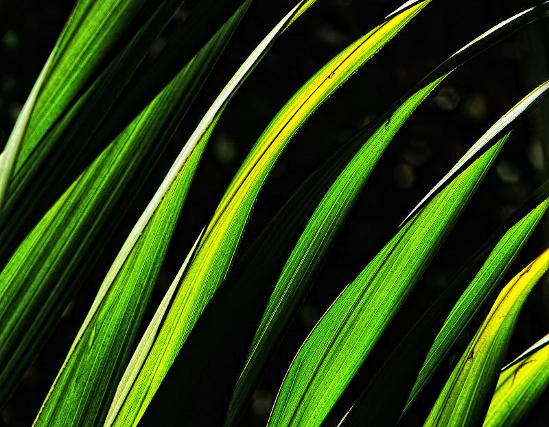 steli di foglie nel mio giardino. di Fiorenza Aldo Photo