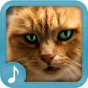 Meowing Cat Sounds icon