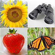 Easy Pictures and Words - Photo-Quiz with 5 Topics