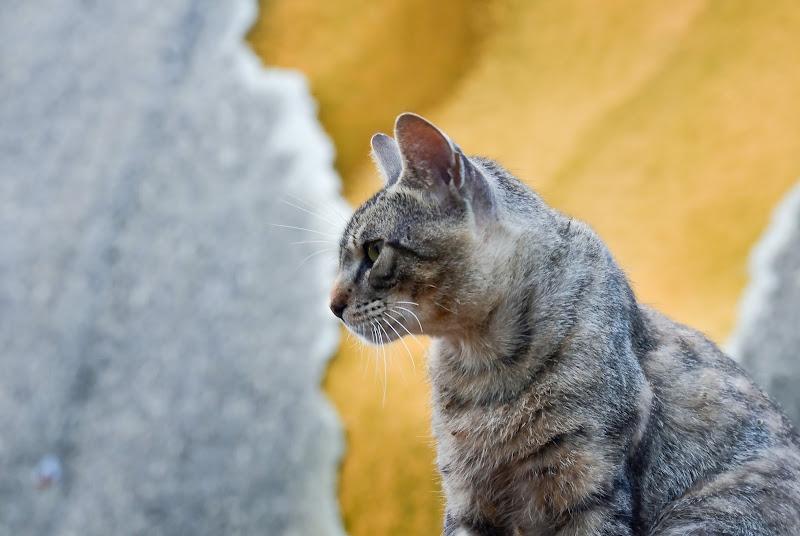 Il gatto e il muro  di Wilmanna