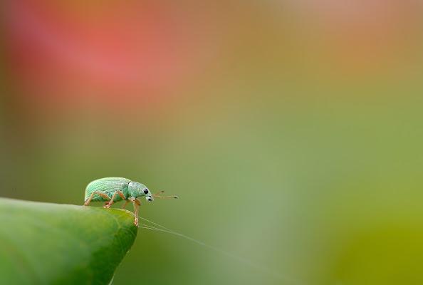 Verde smeraldo di Claudio Tenca