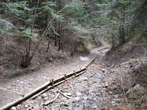 Photo: 17.Ścieżka w górnej części Wąwozu Szopczańskiego.
