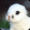 Bunny Live Wallpaper icon