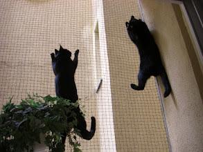 Photo: Batman forever! Ein gutes Netz lässt uns auch gut schlafen..... (Balkon)