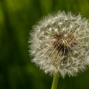 Seeds Ready by Barry Smith - Nature Up Close Other plants ( nature, plants, seeds, nature up close, wild,  )