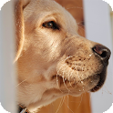 Labrador Dogs Pack 2 Wallpaper icon