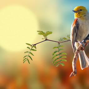 First Light by Charlie Alolkoy - Illustration Animals ( bird, fly, branch, sunrise, feather, light, verdin, sun )