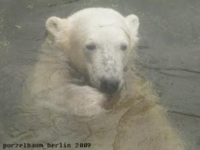 Photo: Knuts morgendliche Begruessung durch die Besucherscheibe :-)