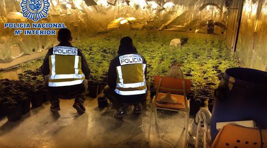 120 detenidos por delitos relativos al cultivo de marihuana en lo que va de año