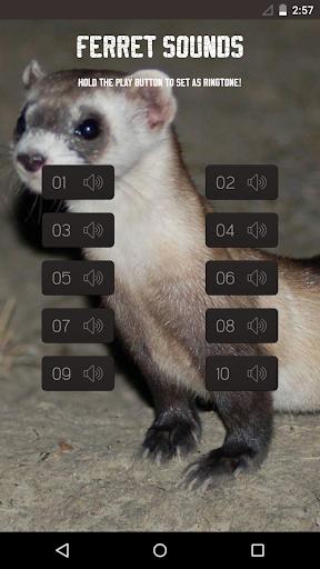 Ferret Sounds