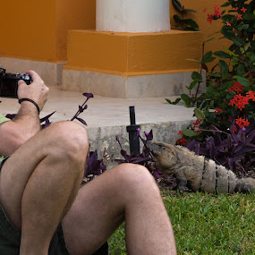 Up Close and Personal by Donna Brittain - People Professional People ( lizard, mexico, photographer, riviera maya.iguana, photographers, taking a photo, photographing, photographers taking a photo, snapping a shot )