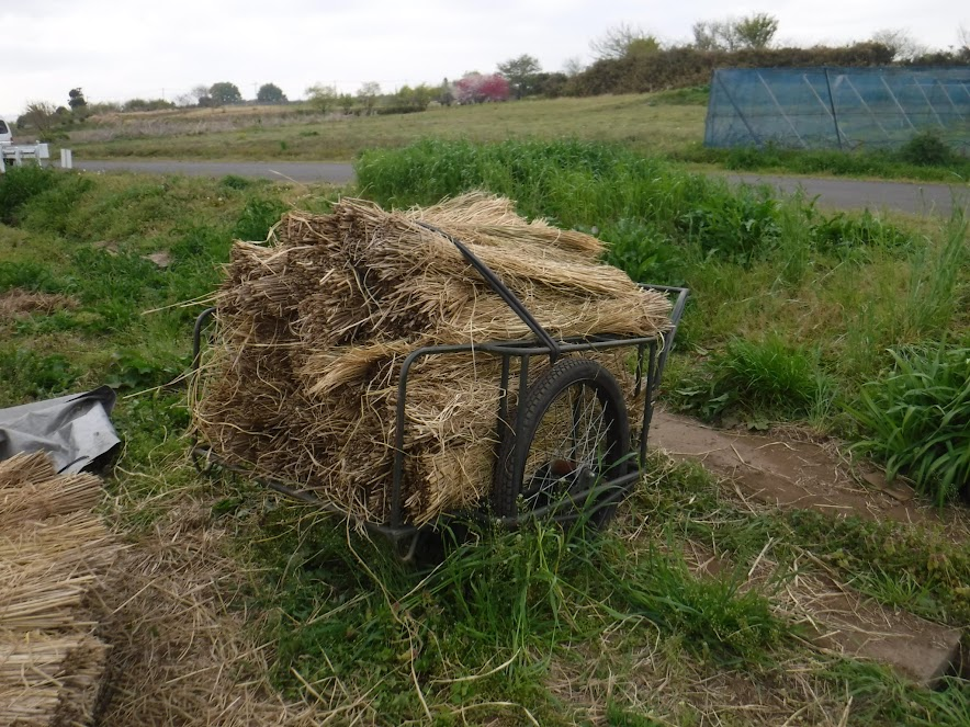 稲わらを満載したリアカー 2つ隣のカメの畑に移動