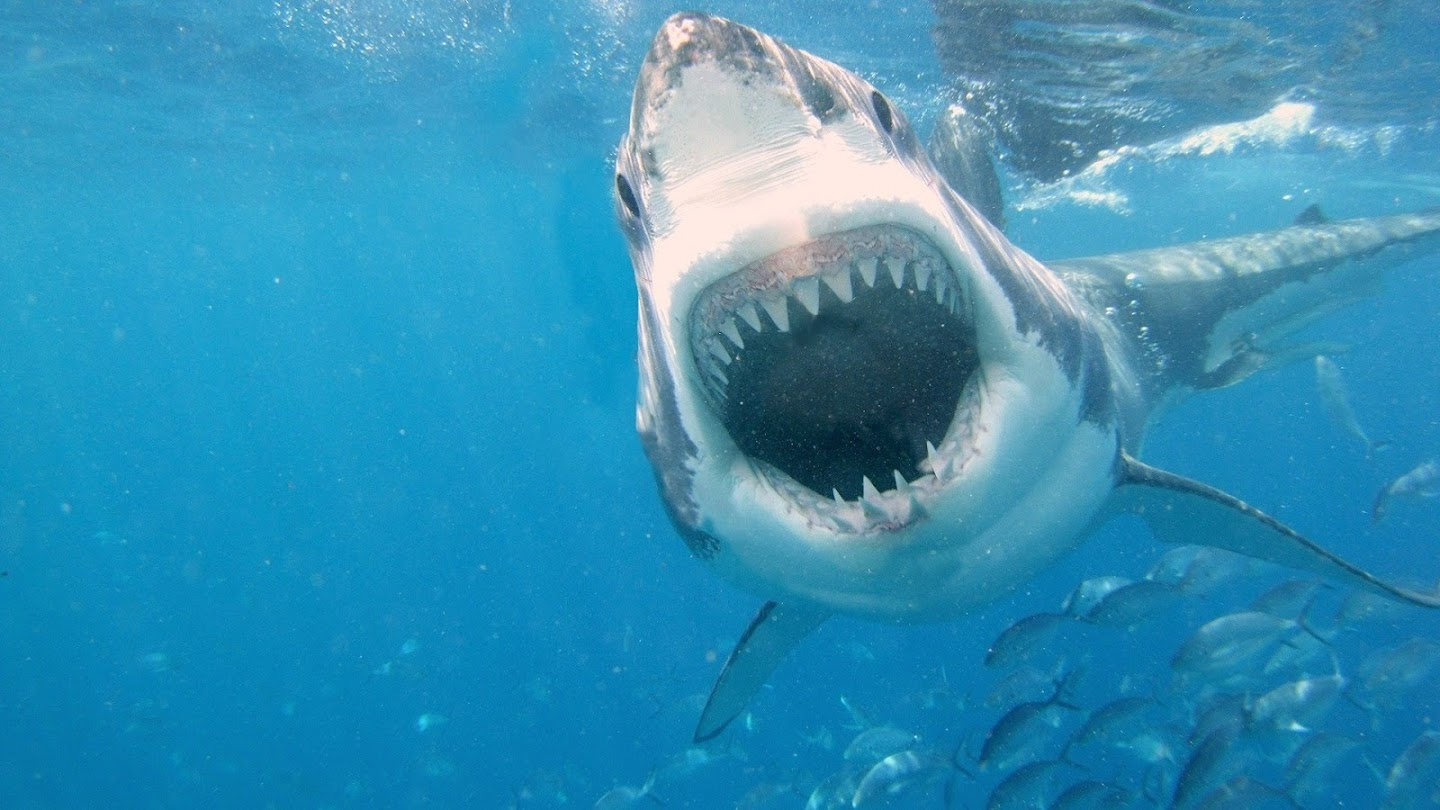 Watch Sharks Attack ! live
