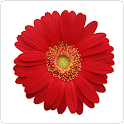 Stickers: Flowers icon