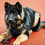 Fantastic Police Dog Icon