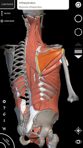 Muscle | Skeleton - 3D Atlas of Anatomy 1.8.2 screenshots 2