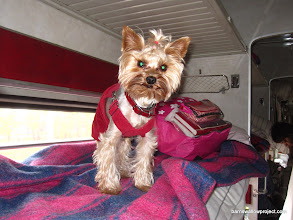 Photo: A ferocious guard dog on the train