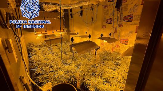 Detienen a una vecina de La Cañada con dos invernaderos de marihuana en su casa