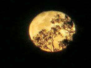 Photo: Moonrise