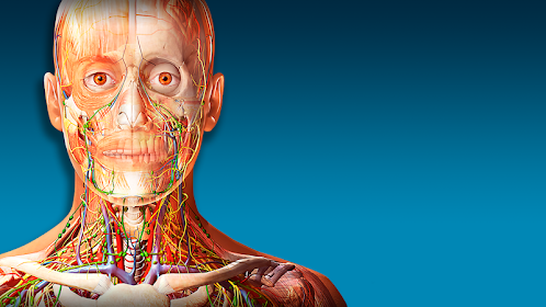 3D-Anatomieatlas des menschlichen Körpers 2019 – Apps bei Google Play