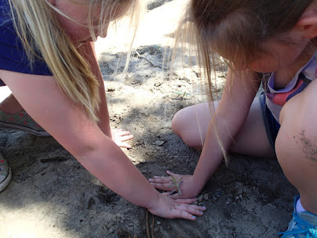 Two girls carefully plant a small milkweed at Putah Creek.