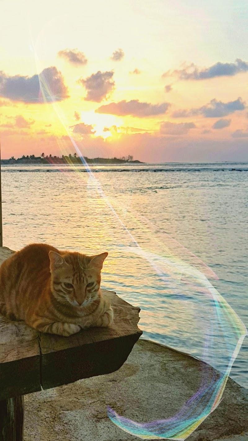Sono un gatto magico di marinafranzone