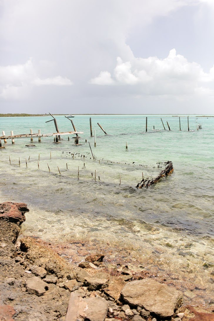 Turks and Caicos Conch Farm Tour (15 Best Things to Do in Turks and Caicos).