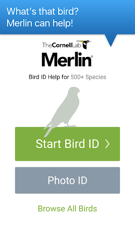 Merlin Bird ID by Cornell Lab of Ornithology Screenshot